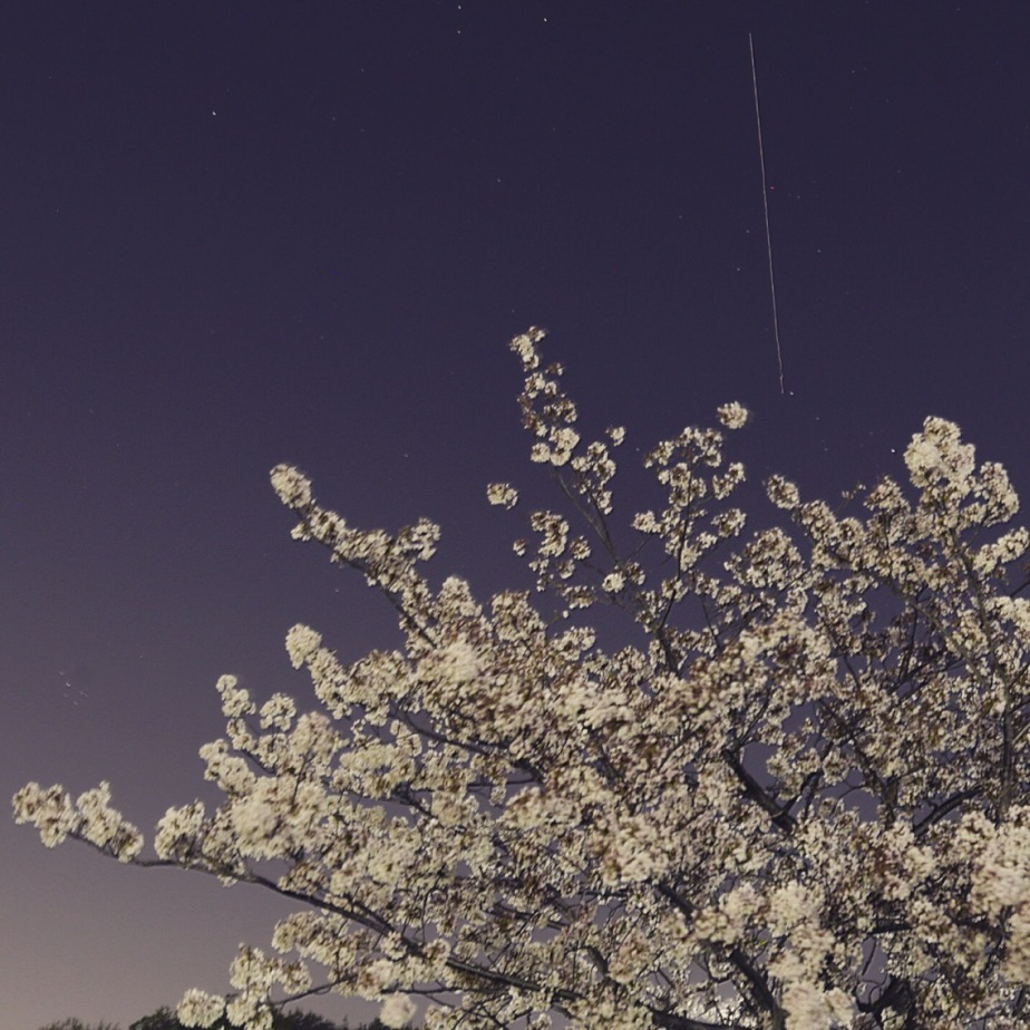 ISS with cherry blossoms